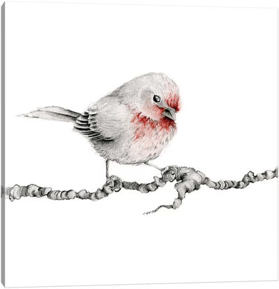 Little Red Finch Canvas Art Print