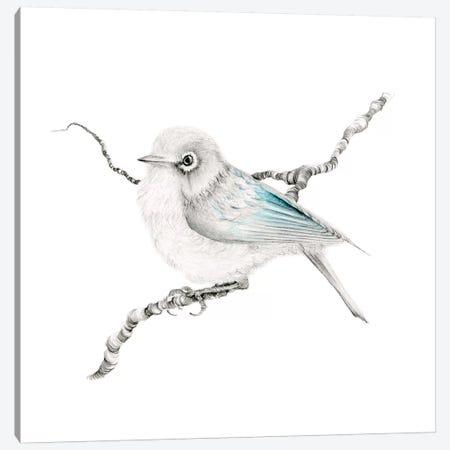 Little Teal Finch Canvas Print #JHB43} by Joanna Haber Art Print