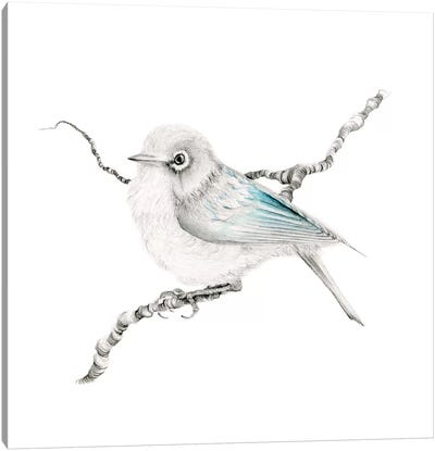 Little Teal Finch Canvas Art Print