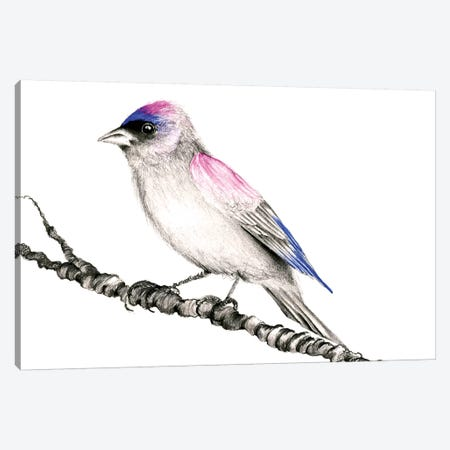 Purple Bird Canvas Print #JHB50} by Joanna Haber Canvas Wall Art