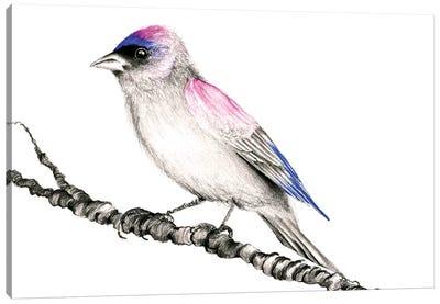 Purple Bird Canvas Art Print