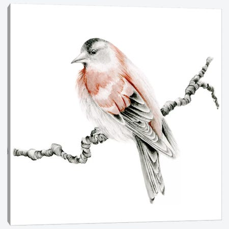 Red Bird Canvas Print #JHB53} by Joanna Haber Canvas Art