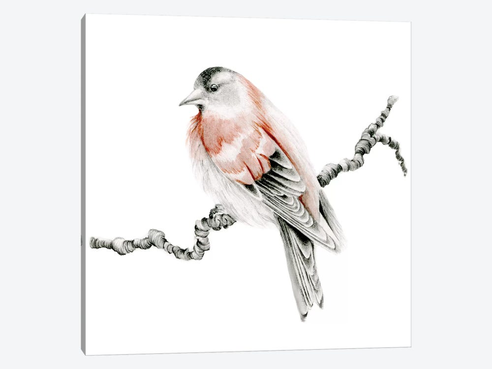 Red Bird by Joanna Haber 1-piece Art Print