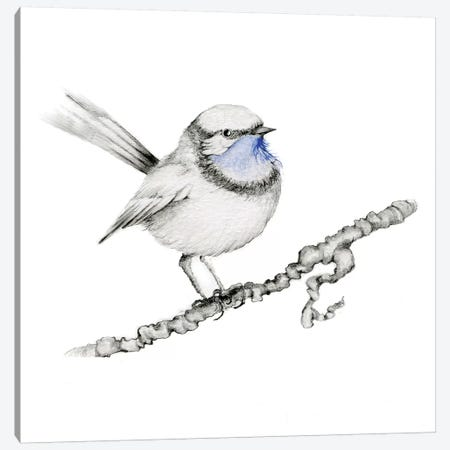 Royal Blue Bird Canvas Print #JHB55} by Joanna Haber Art Print