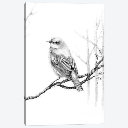 Black & White Bird Canvas Print #JHB5} by Joanna Haber Canvas Wall Art