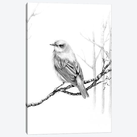 Black & White Bird Canvas Print #JHB5} by Joanna Haber Canvas Wall Art
