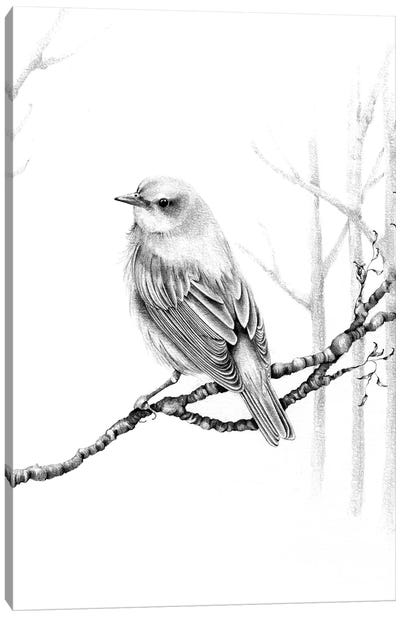 Black & White Bird Canvas Art Print