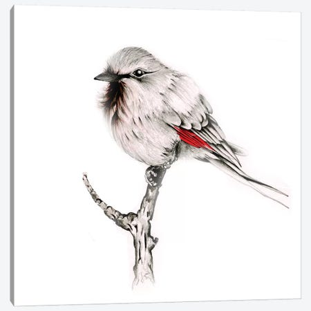 Wise Bird Canvas Print #JHB69} by Joanna Haber Canvas Print