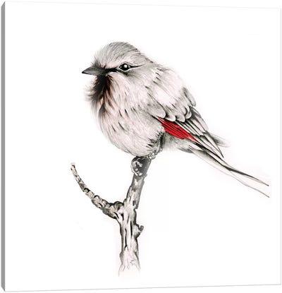 Wise Bird Canvas Art Print