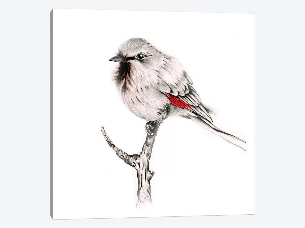 Wise Bird by Joanna Haber 1-piece Canvas Art