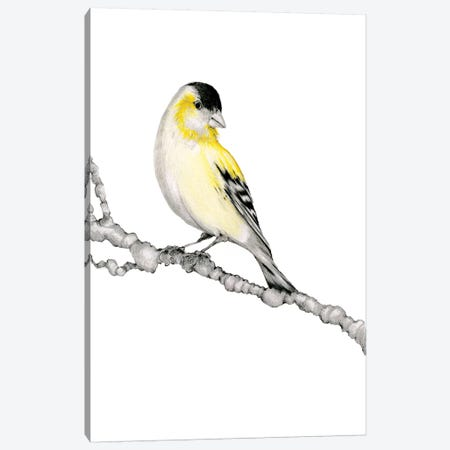 Yellow Bird Canvas Print #JHB71} by Joanna Haber Canvas Artwork