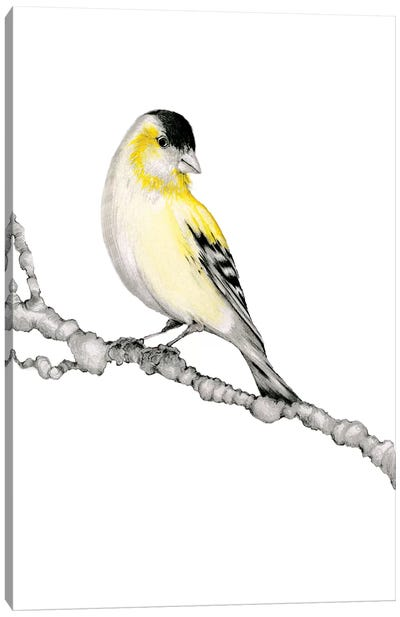 Yellow Bird Canvas Art Print
