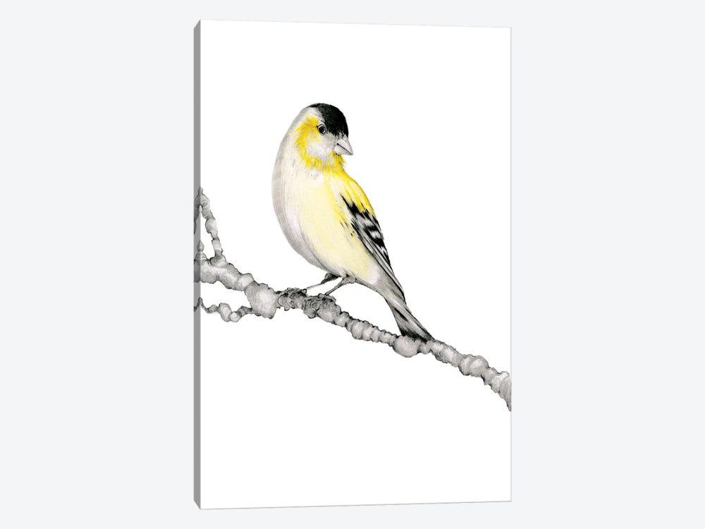 Yellow Bird by Joanna Haber 1-piece Canvas Print