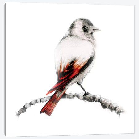 Brown Bird Canvas Print #JHB8} by Joanna Haber Canvas Art Print