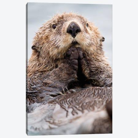 Sea Otter Juvenile, Katmai, Alaska I Canvas Print #JHE5} by Jaymi Heimbuch Art Print