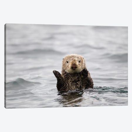 Sea Otter, Katmai, Alaska Canvas Print #JHE7} by Jaymi Heimbuch Art Print