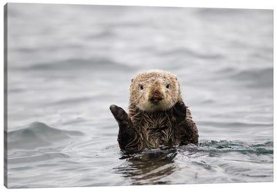 Sea Otter, Katmai, Alaska Canvas Art Print