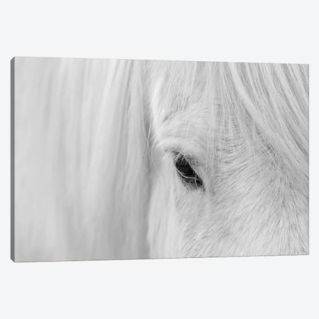 Whisper Of Iceland Canvas Print #JHF14} by John Fan Art Print