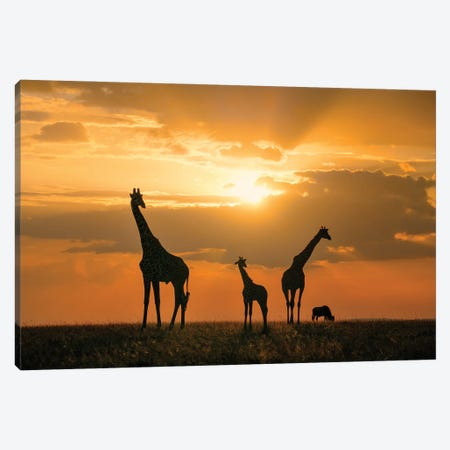Golden Africa Canvas Print #JHF18} by John Fan Canvas Wall Art