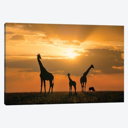 Golden Africa Canvas Print #JHF18} by John Fan Canvas Wall Art