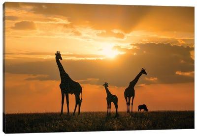 Golden Africa Canvas Art Print