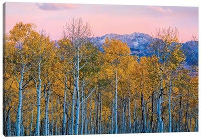 Autumn Delight Canvas Art Print