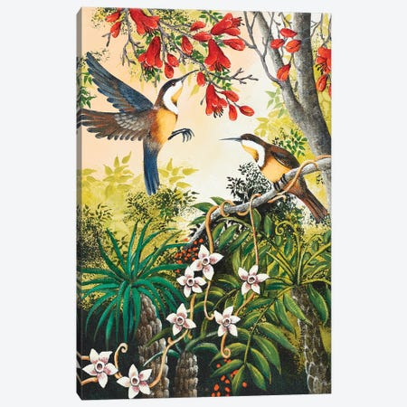 Honey Eaters Canvas Print #JHL30} by Johanna Hildebrandt Canvas Wall Art