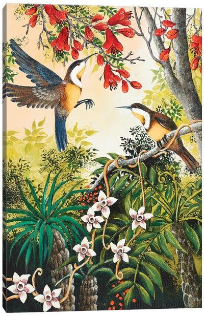 Honey Eaters Canvas Art Print