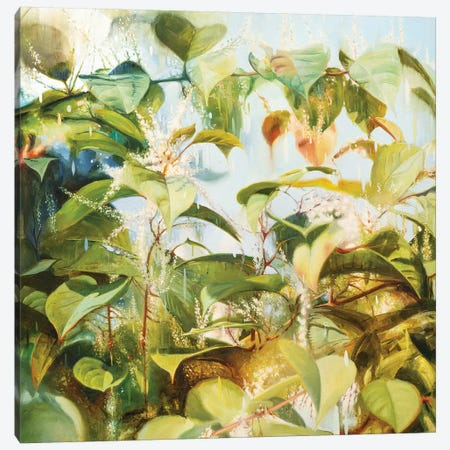 Japanese Knotweed Canvas Print #JHM18} by Johnny Morant Art Print