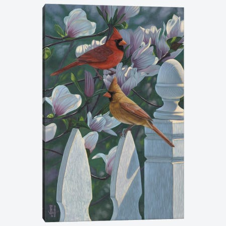 Cardinals & Magnolias Canvas Print #JHO10} by Jeffrey Hoff Canvas Print