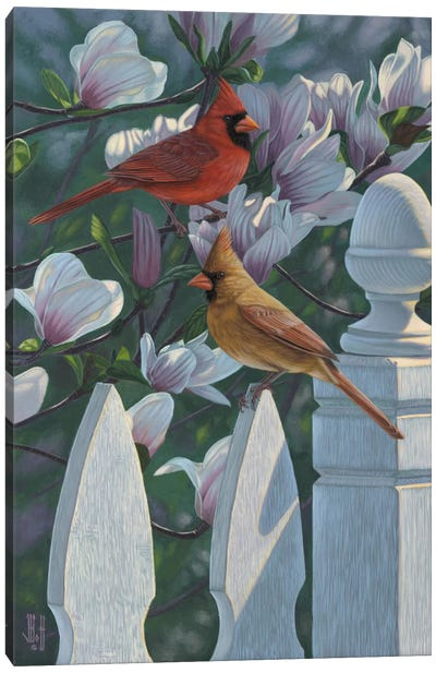 Cardinals & Magnolias Canvas Art Print
