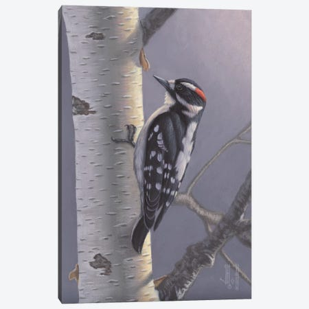 Downy Woodpecker Canvas Print #JHO15} by Jeffrey Hoff Canvas Art