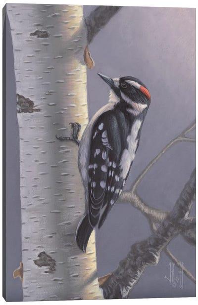 Downy Woodpecker Canvas Print #JHO15