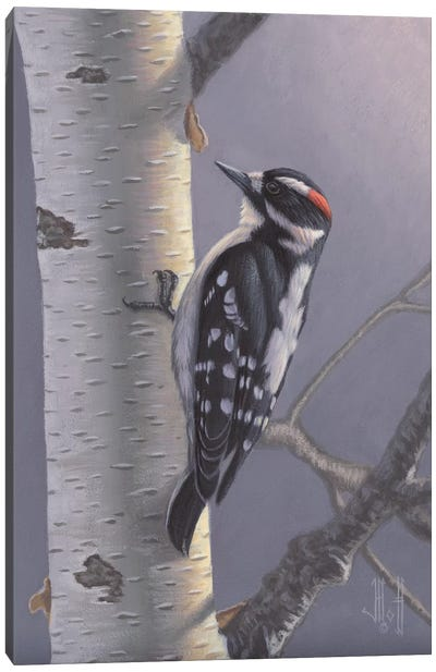 Downy Woodpecker Canvas Art Print