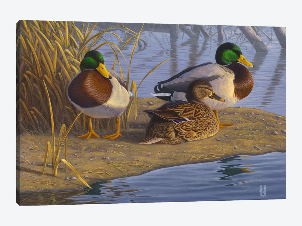 Evening Rest For Northern Greenheads by Jeffrey Hoff 1-piece Art Print