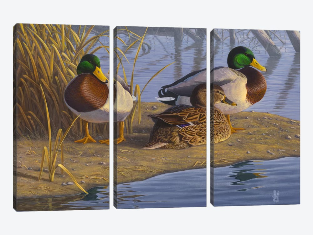 Evening Rest For Northern Greenheads by Jeffrey Hoff 3-piece Art Print