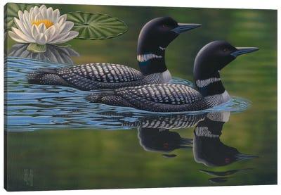Gliding Loon Pair Canvas Print #JHO20
