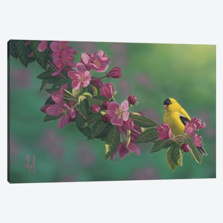 Gold & Pink Canvas Print #JHO21} by Jeffrey Hoff Canvas Wall Art