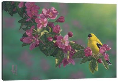 Gold & Pink Canvas Art Print