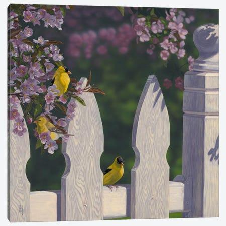 Golden Garden Gems Canvas Print #JHO23} by Jeffrey Hoff Canvas Art