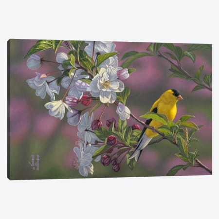 Goldfinch & Spring Blossoms Canvas Print #JHO25} by Jeffrey Hoff Canvas Art Print