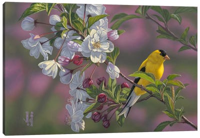 Goldfinch & Spring Blossoms Canvas Print #JHO25