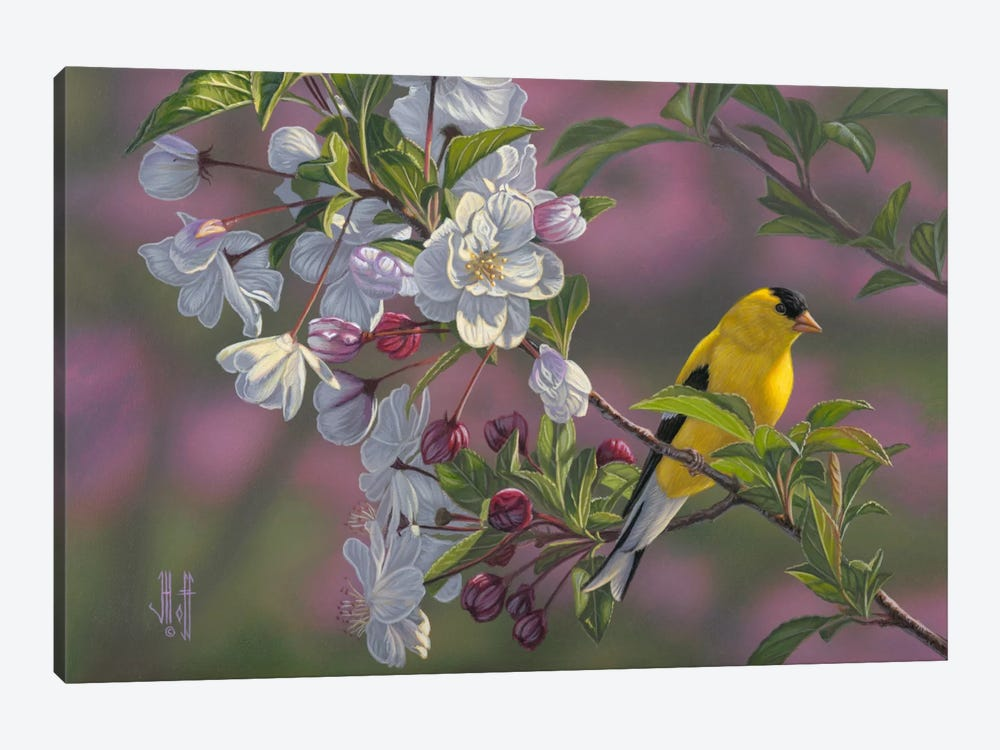 Goldfinch & Spring Blossoms by Jeffrey Hoff 1-piece Canvas Print