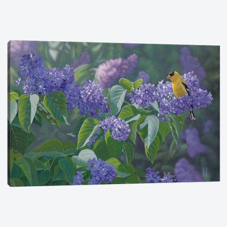 Hint Of Gold 3-Piece Canvas #JHO27} by Jeffrey Hoff Canvas Art Print