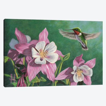 Hummingbird & Pink Columbines Canvas Print #JHO28} by Jeffrey Hoff Canvas Wall Art