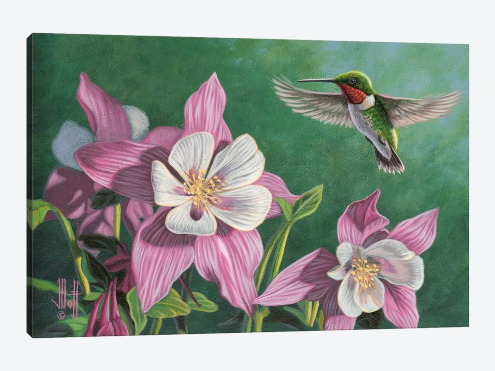 Hummingbird & Pink Columbines 1-piece Canvas Art