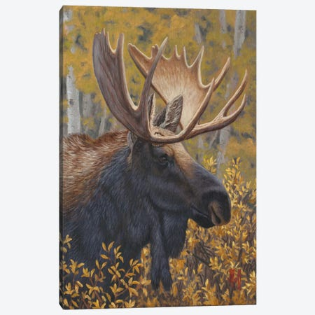 Moose Portrait Canvas Print #JHO30} by Jeffrey Hoff Canvas Art Print