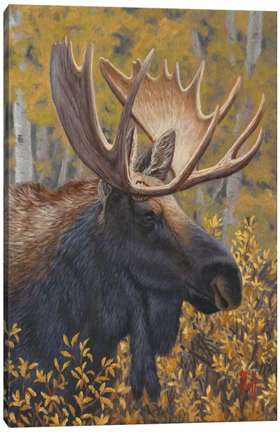 Moose Portrait Canvas Print #JHO30