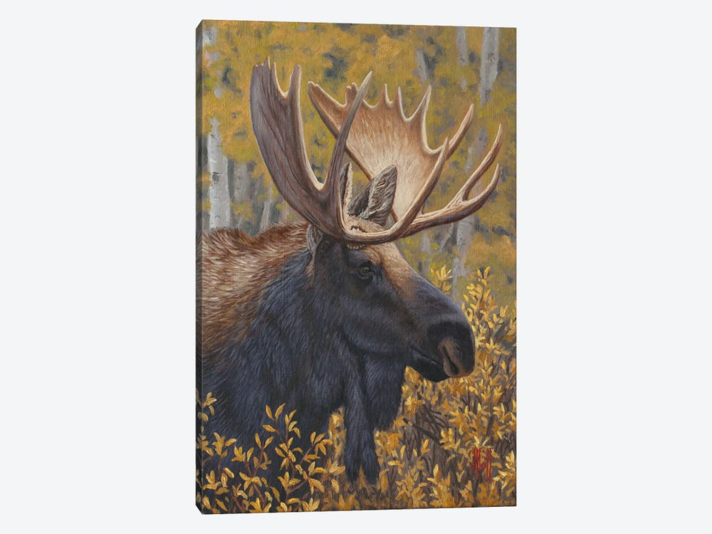 Moose Portrait by Jeffrey Hoff 1-piece Canvas Art Print