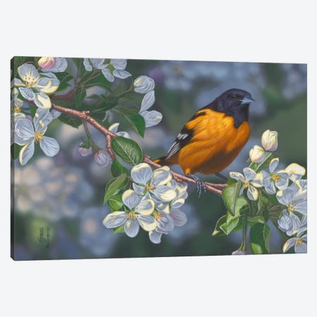 Oriole & Apple Blossoms Canvas Print #JHO33} by Jeffrey Hoff Canvas Art Print